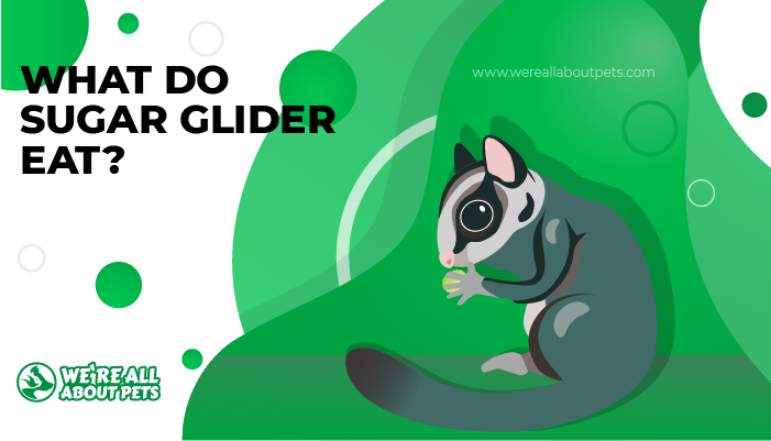 what do sglider eat