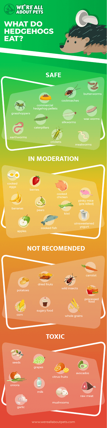 Safe and Unsafe Foods for Hedgehogs