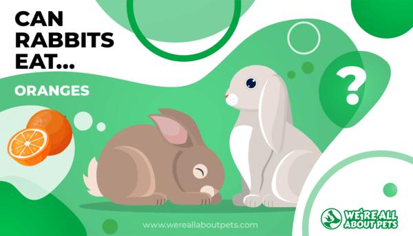 Can Rabbits Eat Oranges?