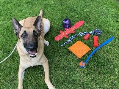Hyper-7-Best-Toys-for-Herding-Dogs-scaled