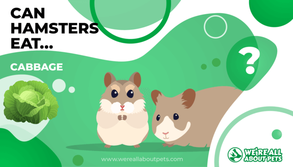 Can Hamsters Eat Cabbage?
