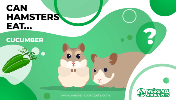 Can Hamsters Eat Cucumber?