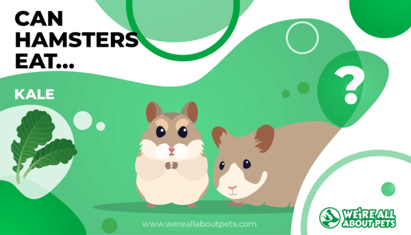 Can Hamsters Eat Kale?