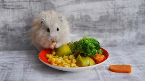 Hamster Fruit and Vegetables Pet Names