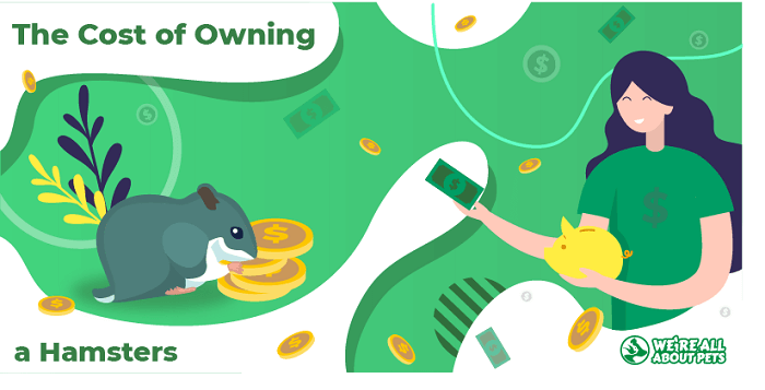 The Cost of Owning a Hamster