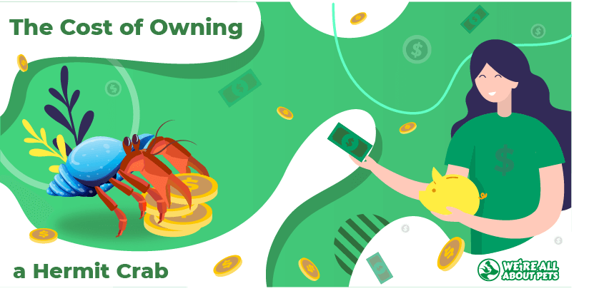The Cost of Owning a Hermit Crab