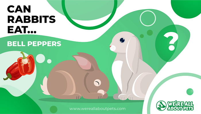 Can Rabbits Eat Bell Peppers?
