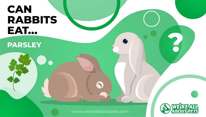 Can Rabbits Eat Parsley?