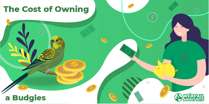 The Cost Of Owning Budgies