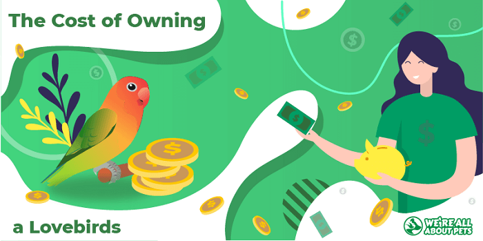 The Cost Of Owning Lovebirds