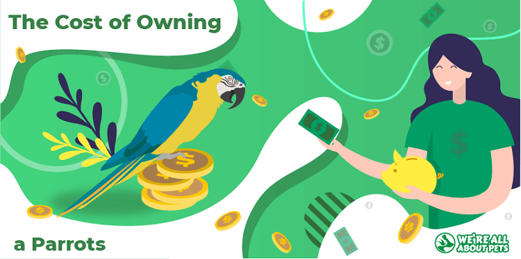 The Cost Of Owning Parrots