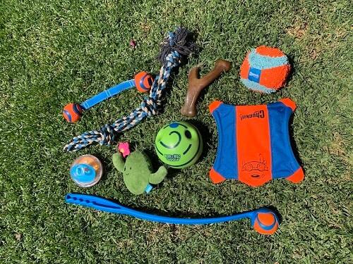 Best Toys for Husky Dogs