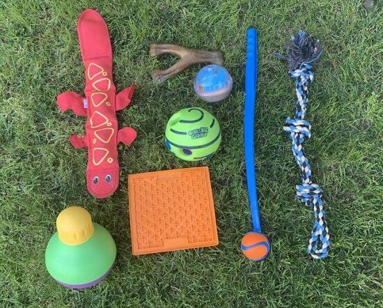 Toys for Australian Shepherds