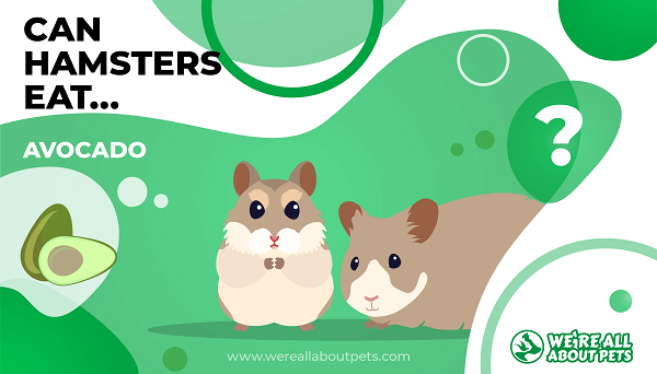 Can Hamsters Eat Avocado?