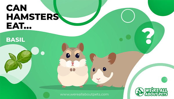 Can Hamsters Eat Basil?