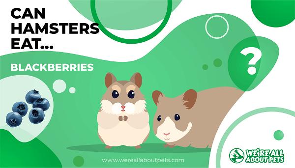 Can Hamsters Eat Blackberries?