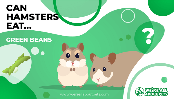 Can Hamsters Eat Green Beans?