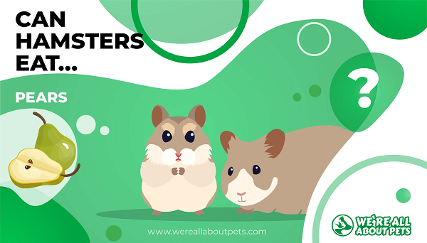 Can Hamsters Eat Pears?