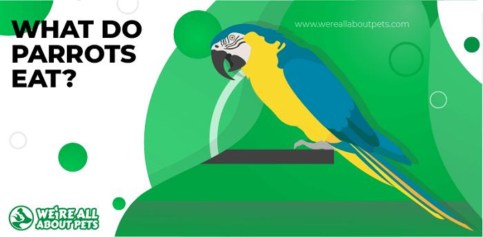 What Do Parrots Eat?