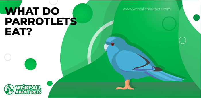 What Do Parrotlets Eat?