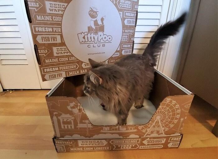Kitty Poo Club