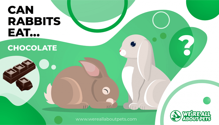 Can Rabbits Eat Chocolate We Re All About Pets