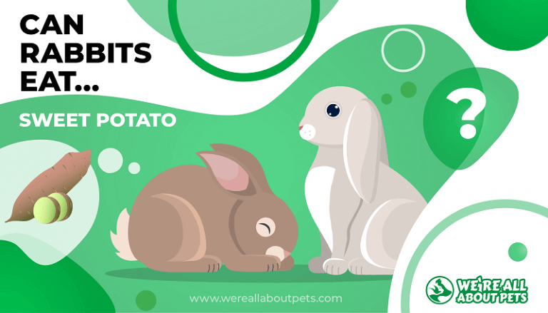 Can Rabbits Eat Sweet Potatoes We Re All About Pets