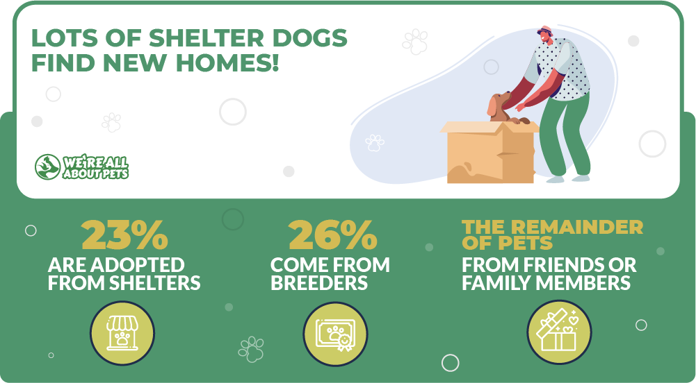 Dog shelter adoption statistics
