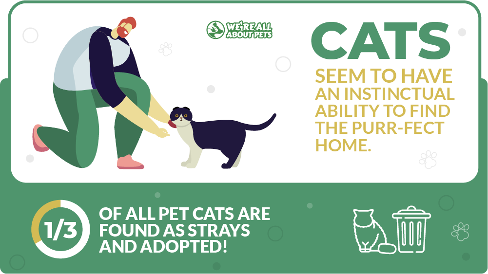 Cats seem to have an instinctual ability to find the purr-fect home