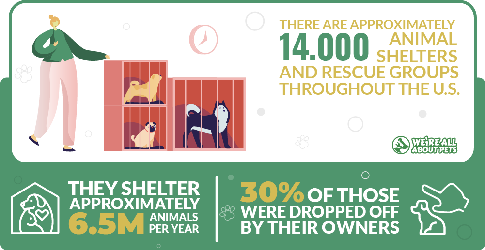 Shelter animals statistics