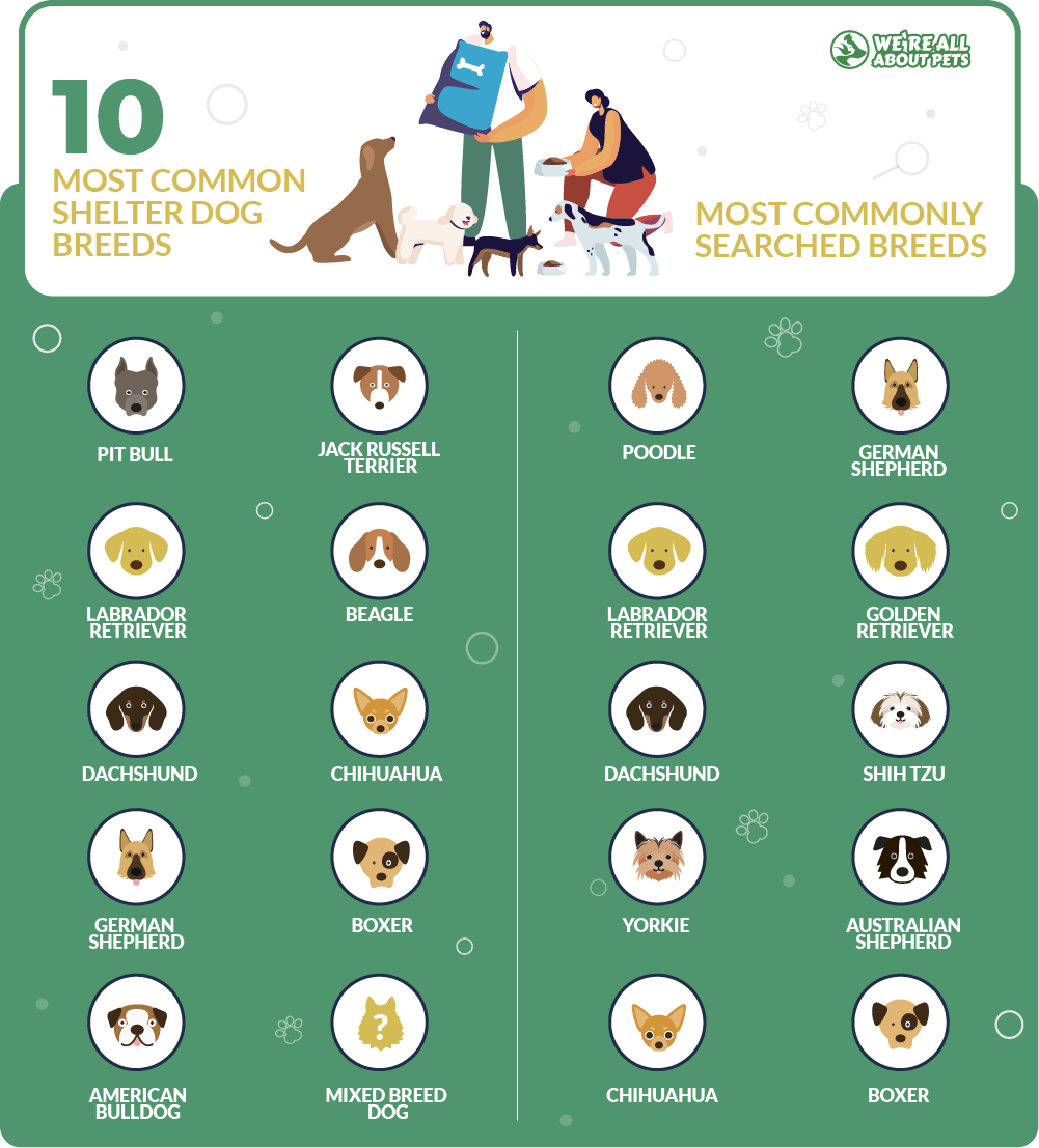 Most common shelter dog breeds