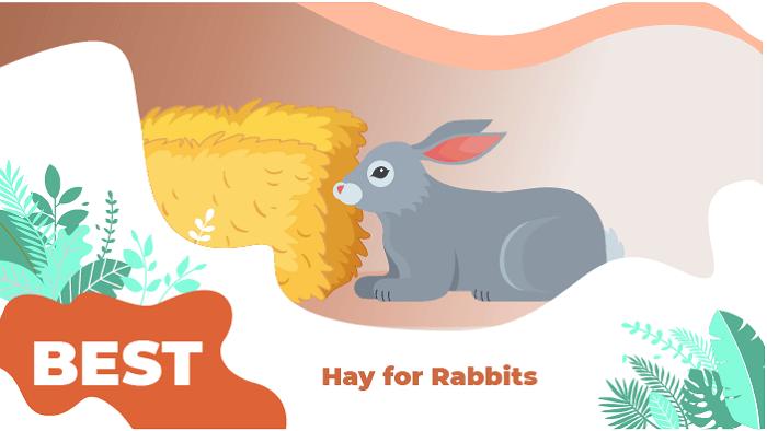 Hay for Rabbit