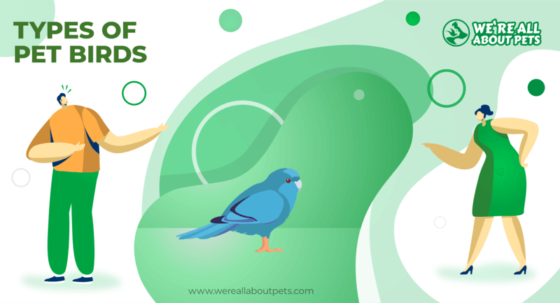 12 Differenttypes Of Pet Birds You Should Know We Re All About Pets