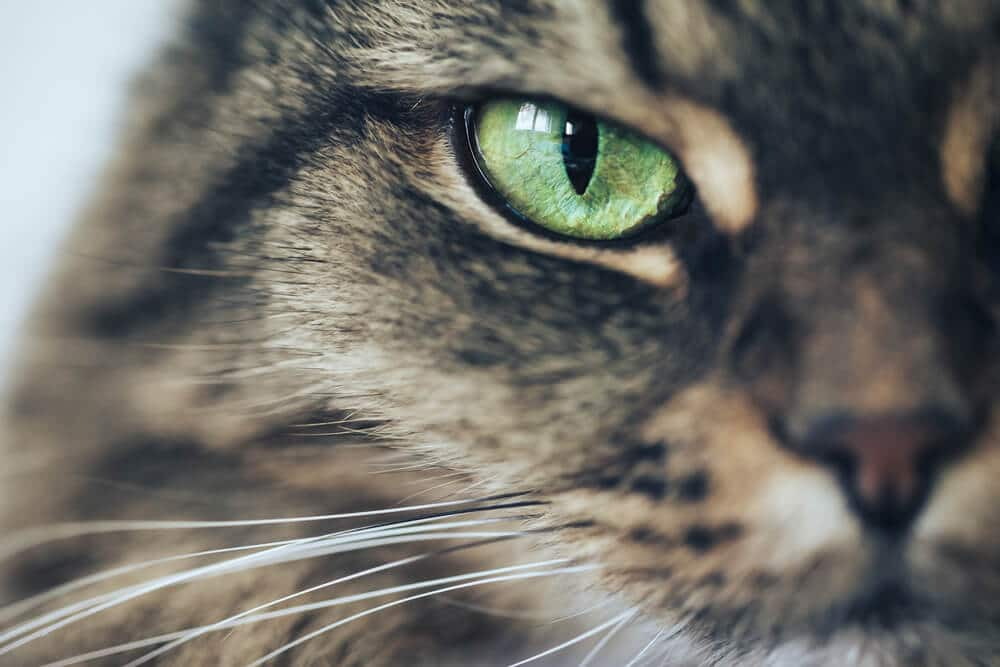 175 Names For Cats With Green Eyes We Re All About Pets