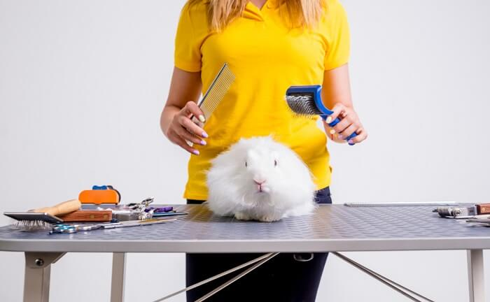 You may never need to bathe your rabbit, but there are several things that you will need to do on a regular basis to keep them well-groomed.