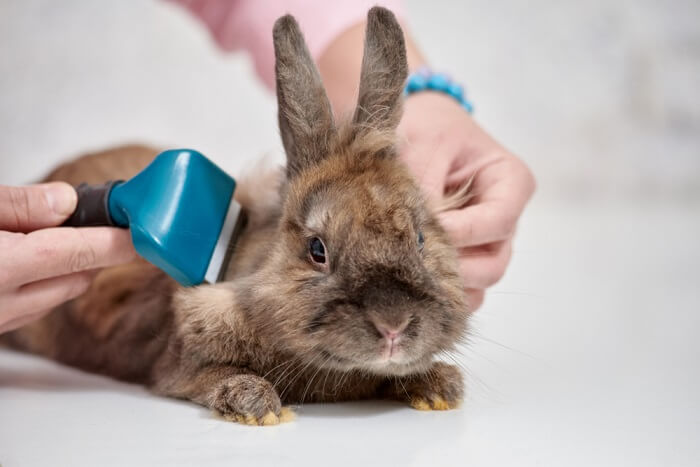 Most rabbit grooming essentials are not very complicated, and if done on a regular basis, they will save you a lot of difficulty in the long run.