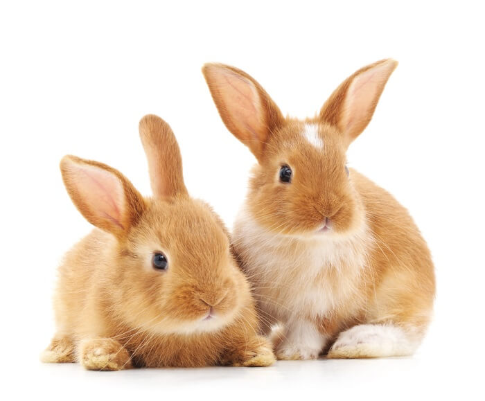 Rabbits are generally very clean animals and spend a lot of time grooming themselves, but they can still use a little help once in a while.