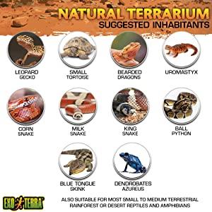 Exo Terra Glass Natural Terrarium Kit