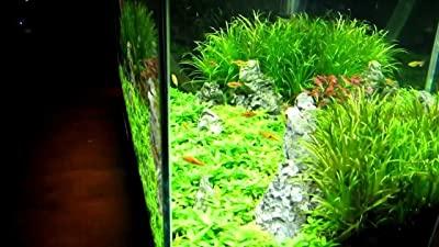 Finnex FugeRay Planted+ LED Aquarium Light