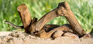 Galapagos (05064) Aspen Digs Shavings Bedding