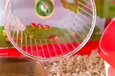 Iris Plastic and Wire Medium Hamster Cage