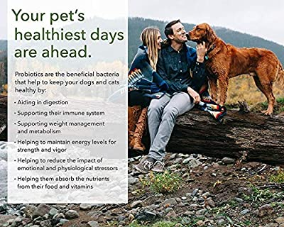 PRO-Pets Probiotics for Dogs and Cats