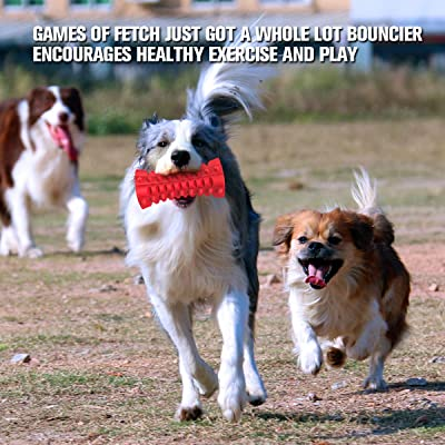 Squeak and Fetch Toy