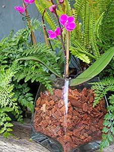 Super Moss (23120) Orchid Potting Bark