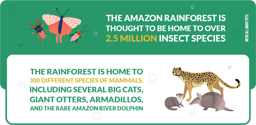 amazon rainforest is home to 2.5 mil insect species