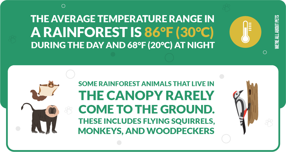 some rainforest animals that live in the canopy rarely come to the ground