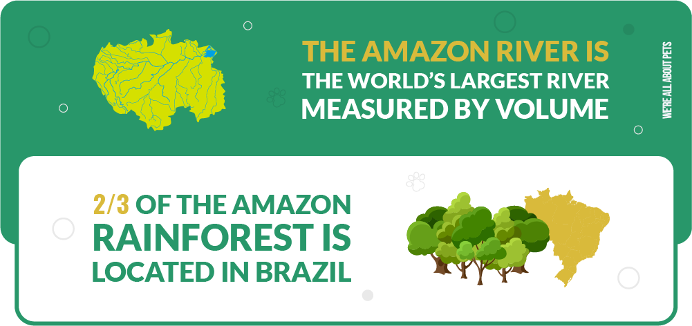 amazon river is the world's larges river measured by volume