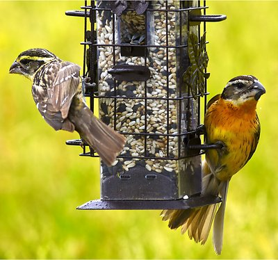 Perky-Pet Squirrel-Be-Gone Wild Bird Feeder