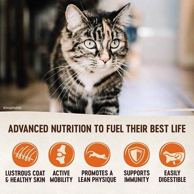 Wellness CORE Grain-Free Indoor Formula Dry Cat Food