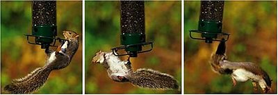 Droll Yankees Yankee Flipper Motorized Bird Feeder